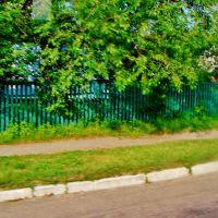 10.06.2012 17:32  Дорога Р-04. Тенистые усадьбы по улице Розы Люксембург., Тараща