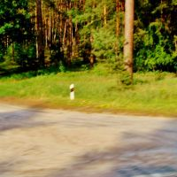 10.06.2012 17:33  Дорога Р-04. Выездная дорога с леса., Тараща