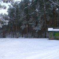 граница лесничеств, Алексадровка
