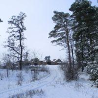 лесничее хозяйство, Алексадровка
