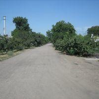 Road, Добровеличковка