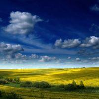 где-то в полях Украины (...somewhere in the fields of Ukraine...), Добровеличковка