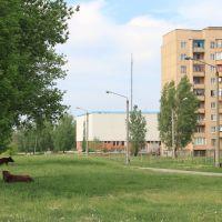 Для долинчан випасти теля беспоредньо у місті - не питання, Долинская