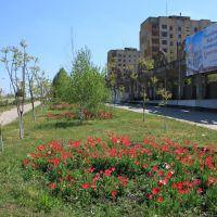 Невеличкі квітники прикрашають Долинську, Долинская