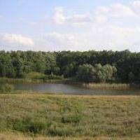 Ставок возле с. Михайловка (панорама), Елизаветградка