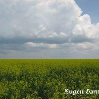 Fields of Ukraine (Поля Украины), Елизаветградка