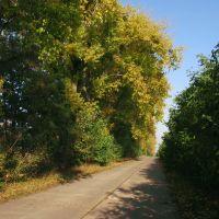 Осень(1), Елизаветградка