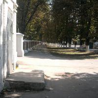 центральная улица, Знаменка