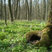 Весна у лісі, Знаменка-Вторая