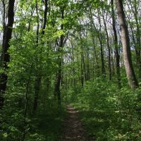 лес возле рзд.5 км, Знаменка-Вторая