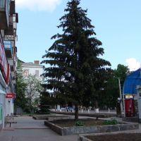 Ялинка біля маг. Мелодія / pine-tree near Melody shop, Кировоград