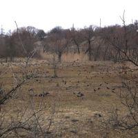Вороння на луках, Новомиргород