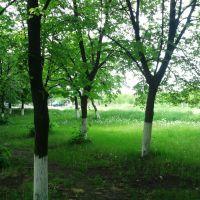 Весна, Новоукраинка