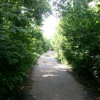 Колись тут було село, Ольшанка