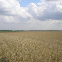 Придніпровська височина, Ольшанка