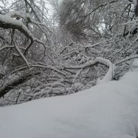 Ветки снега, Светловодск