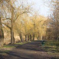 парк г. Ульяновка, Ульяновка