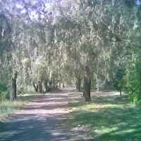 Набережная алея в парку, Ульяновка