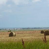 Поле возле Белосарайской косы, Азовское