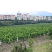Vineyard near Alushta, Алушта