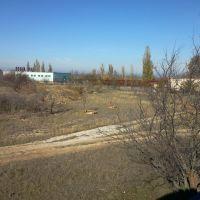 львы, Белогорск