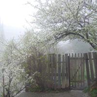 Туман. Мотив. 31.03.08, Гаспра
