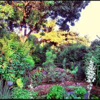 Botanic Garden in Evpatoria., Евпатория