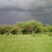 Яблочный сад, Зуя
