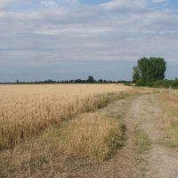 поле, Нижнегорский