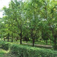парк, Нижнегорский