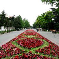 Sevastopol flowers, Севастополь