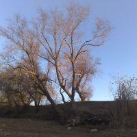 Дерево на берегу, Армянск