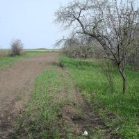 Выход в поле, Артемовск