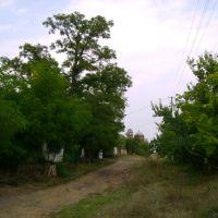 сельская дорога, Байрачки
