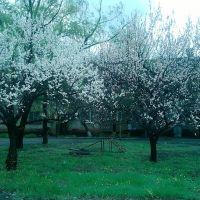 Весна в Сутоганском дворике, Белое