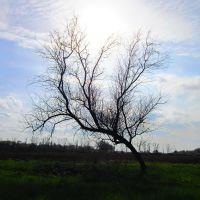 Обугленное дерево, Белое