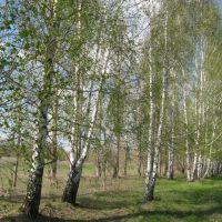 весна вдоль Айдара, Белолуцк