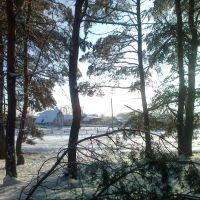 Окраина леса в Боровском, Боровское