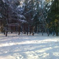Опушка леса в Боровском, Боровское