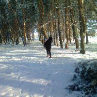Боровщанский лес, Боровское
