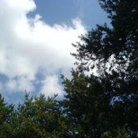 Сосны и облака, Боровское
