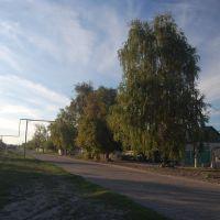 Береза, Боровское