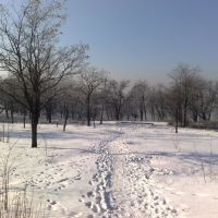 Park on a frosty day (2011), Брянка