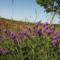Цветы степей донецких, Вахрушево