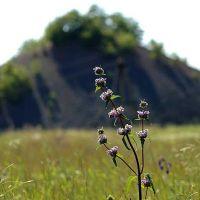 Знойное лето, Вахрушево