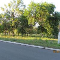 Парк, который я сажал, Вергулевка