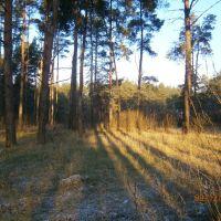 лес, Ворошиловград