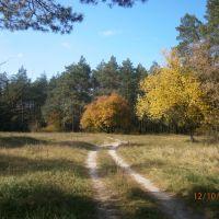 Сосновый лес, Ворошиловград