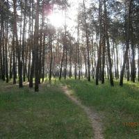 пейзаж,дорожки в лесу, Ворошиловград