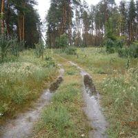 утренний лес после дождика, Ворошиловград
